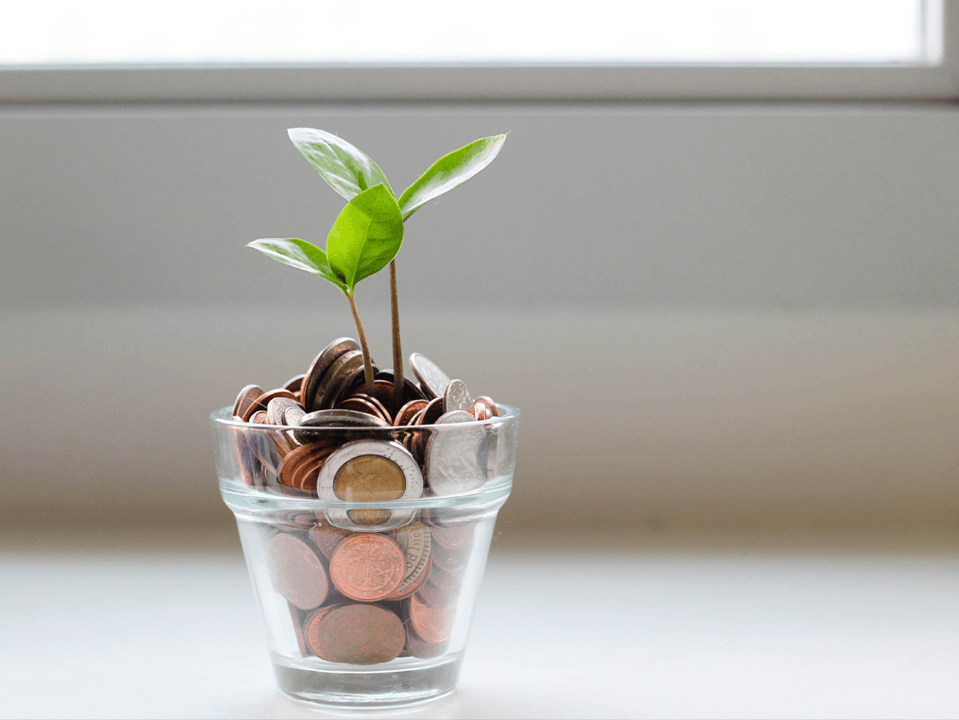 Plant growing in coins
